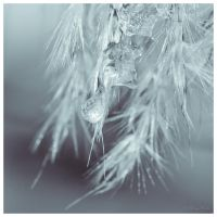 Frozen in Time II by MariaDeinert