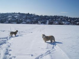 Dogs in the Deep Snow by kate44