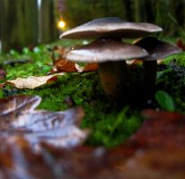 Outfocused Shrooms by spoukideria