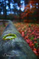 Green Speck by DYWPhotography