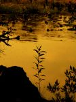 Evening in the Wetlands by charonferryman