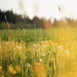meadow by indojo