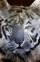 White Charcoal Tiger by mickey-way-win