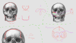 //Art Study | Human Skull - Details Part 2 by stadyone