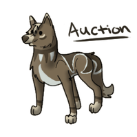 Auction by 490skip