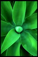 Green Star by PauloOliveira