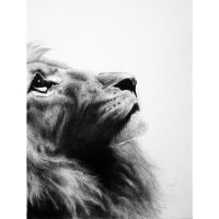 Lion by artwithnotes205
