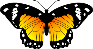 Butterfly (Yellow and Orange) by Eiluvision