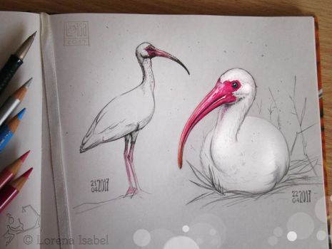 # 40 - White Ibis - by Loisa