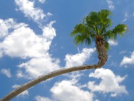 Palm Tree 2 by richardxthripp