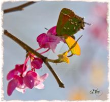 Beautiful Butterfly 10 by DleeKirby