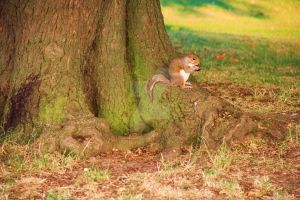 Sweet squirrell in London by LoonyHermione