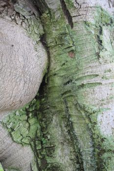 tree trunk with moss by c-avery-collages