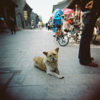 Street Dog by Oogymcgloogy