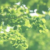 Photosynthesis by 1Mathew7