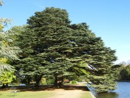 Tree at Osterley Park by captainflynn