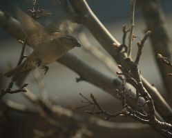 Sparrow In Flight by toshema