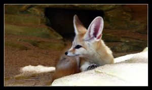 Little fennec fox by floflo