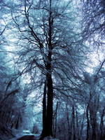 Trees of winter by A-McQ
