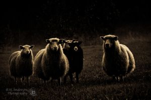 -The family black sheep- by BHandersen