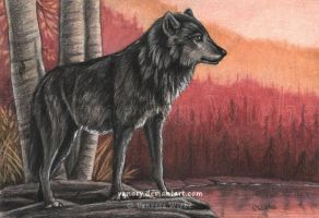 Colors of Autumn - Wolf by Vanory