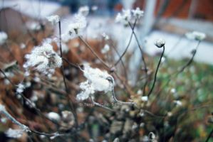 winter time by spiti84