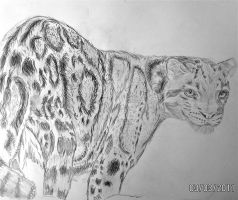clouded leopard by rimrimrim