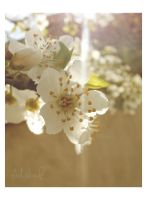 the same spring by ad-shor