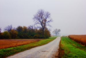 Autumn, Down a Dirt Road I by pubculture