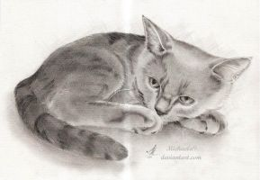 British Blue Cat by Michaela9