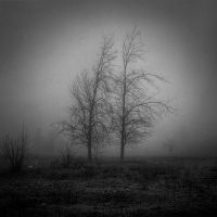 woods 12 by ghostrider-in-ze-sky