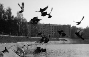 Pigeons and a dog by Cyrill-Toboe
