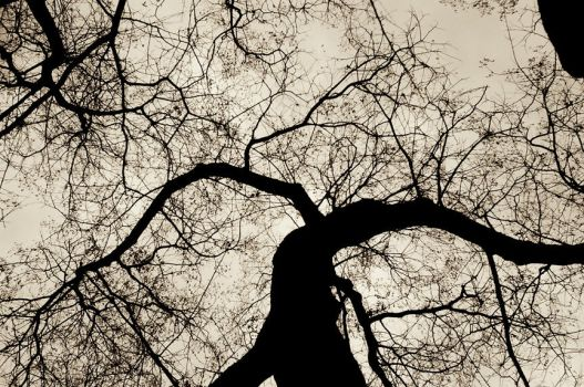 tree silhouette by leonnosyt