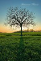 My tree... by vincentfavre
