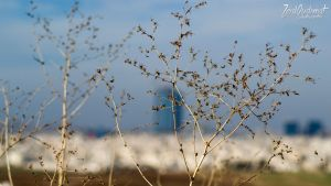 Amman Branches by ZQPhotography