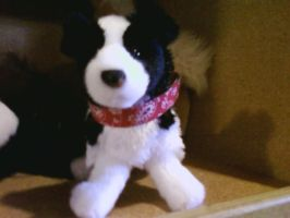 Border Collie plush by Midnight--Comet