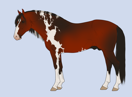 Horse adoptables point auction by BH-Adoptables