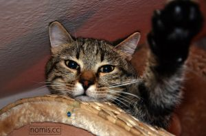 I cant stop photograph my cat by cDosArt