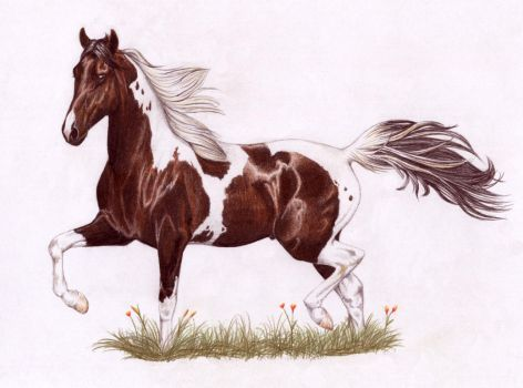Tobiano National Show Horse by Tweakster
