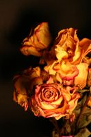 Dried Yellow Roses by Della-Stock