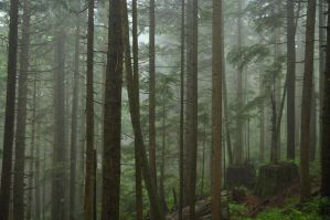 Misty Forest by salohcin19
