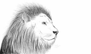 Lion by gismo84