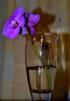 A Flower in a Vase by Toni-R