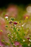 Beauty after rain by 89-RAW-89