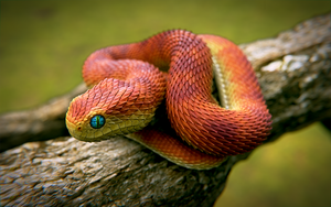 Orange Snake by obi1knobi