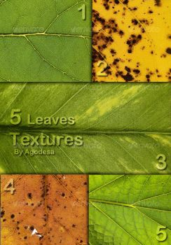 5 Leaves Textures by agodesa