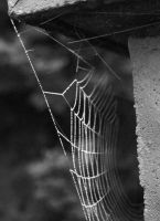 spider network by s-talker
