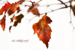 Falling for You IV by Scooby777