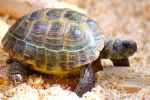 Turtle by chamathe