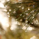Drops Of Life by Alexandru1988